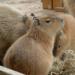 ゴールデンウィークに子供と日帰り旅行 動物園と自然スポット